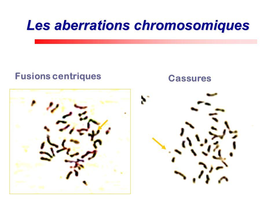 Fusions centriques Cassures Les aberrations chromosomiques