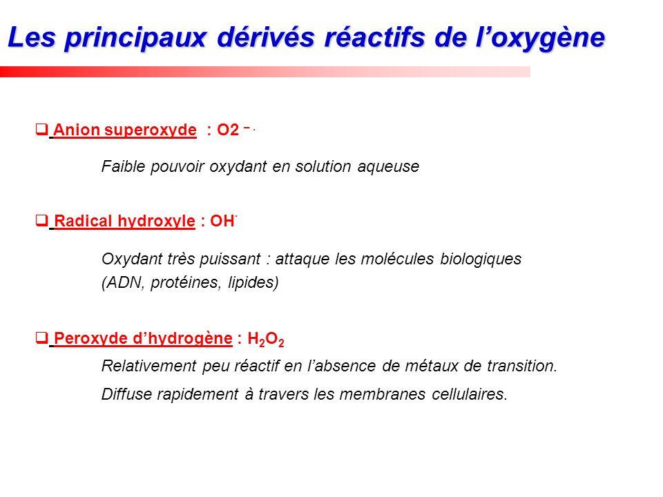 Anion superoxyde : O2 –. Faible pouvoir oxydant en solution aqueuse Radical hydroxyle : OH. Oxydant très puissant : attaque les molécules biologiques