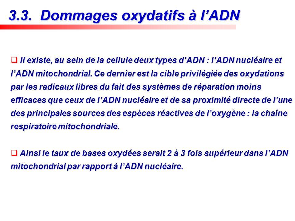 Il existe, au sein de la cellule deux types dADN : lADN nucléaire et lADN mitochondrial. Ce dernier est la cible privilégiée des oxydations par les ra