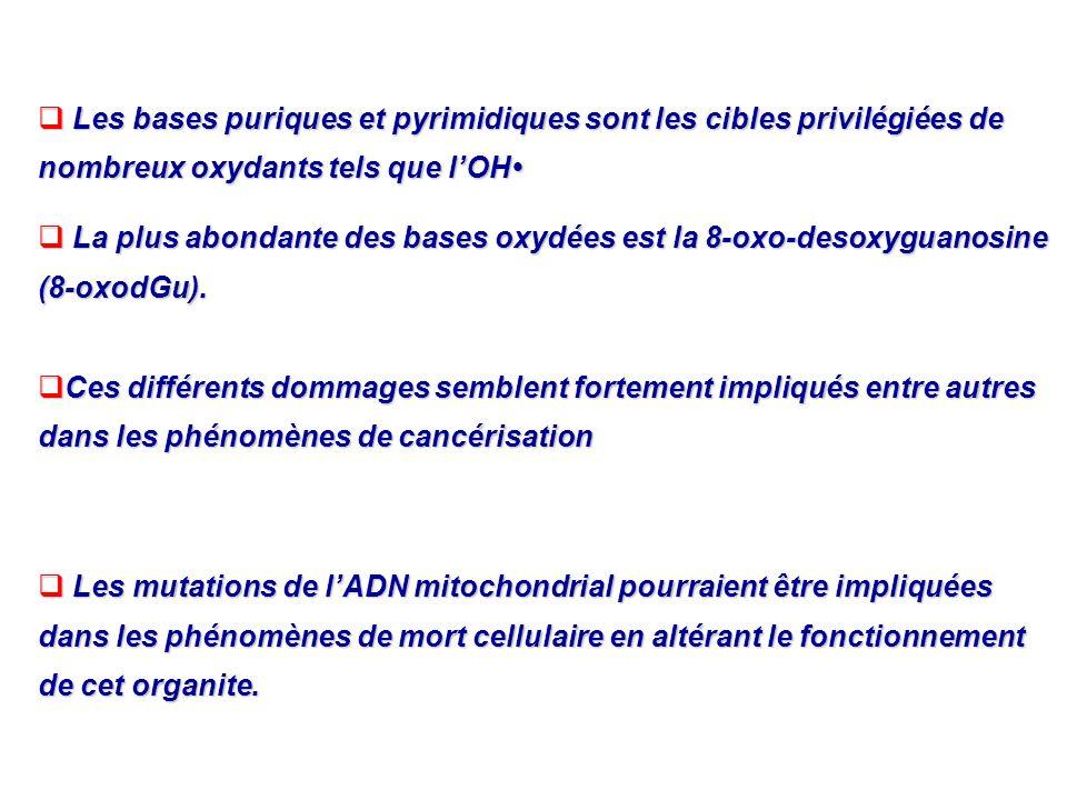 Les bases puriques et pyrimidiques sont les cibles privilégiées de nombreux oxydants tels que lOH Les bases puriques et pyrimidiques sont les cibles p