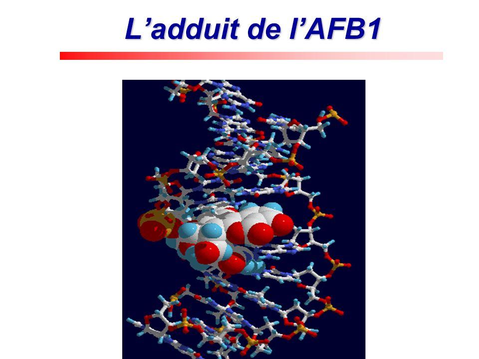 Sites de fixation sur les G ADN N7: site préférentiel modifié par des alkylants (C2H5, CH3) et les mycotoxines.