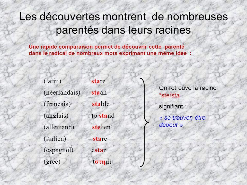 Les découvertes montrent de nombreuses parentés dans leurs racines Une rapide comparaison permet de découvrir cette parenté dans le radical de nombreu