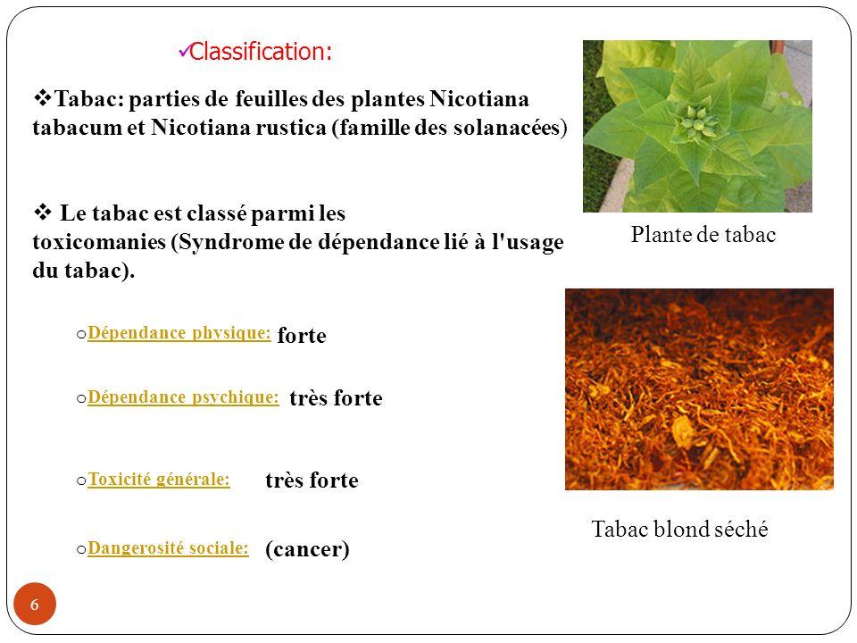 6 Tabac: parties de feuilles des plantes Nicotiana tabacum et Nicotiana rustica (famille des solanacées) Le tabac est classé parmi les toxicomanies (S
