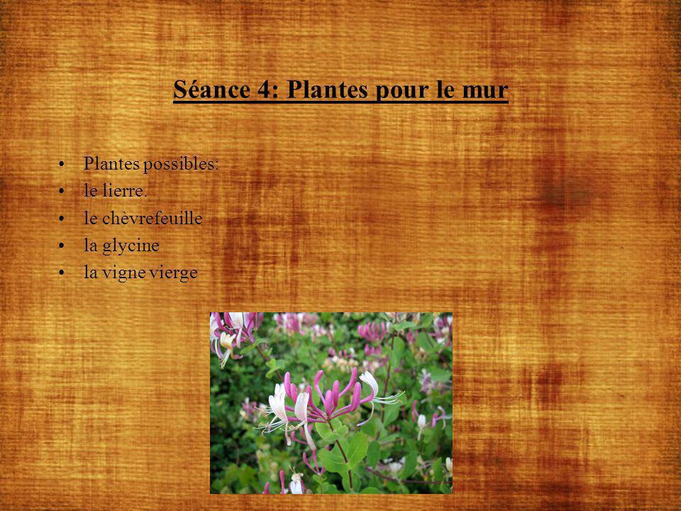 Séance 4: Plantes pour le mur Plantes possibles: le lierre. le chèvrefeuille la glycine la vigne vierge