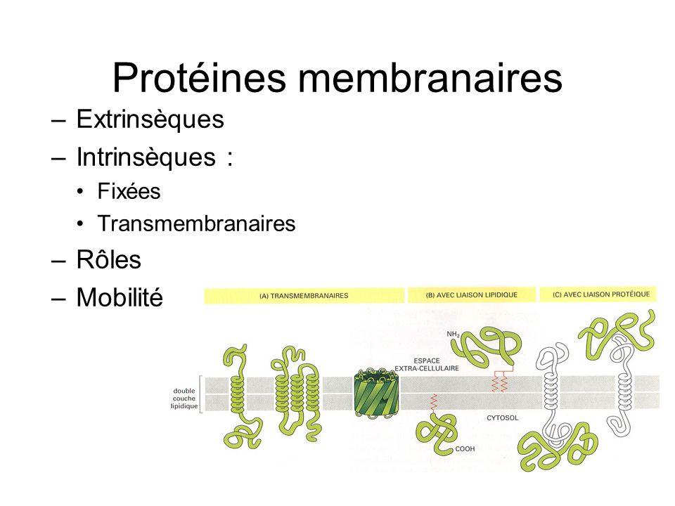 Protéines membranaires –Extrinsèques –Intrinsèques : Fixées Transmembranaires –Rôles –Mobilité