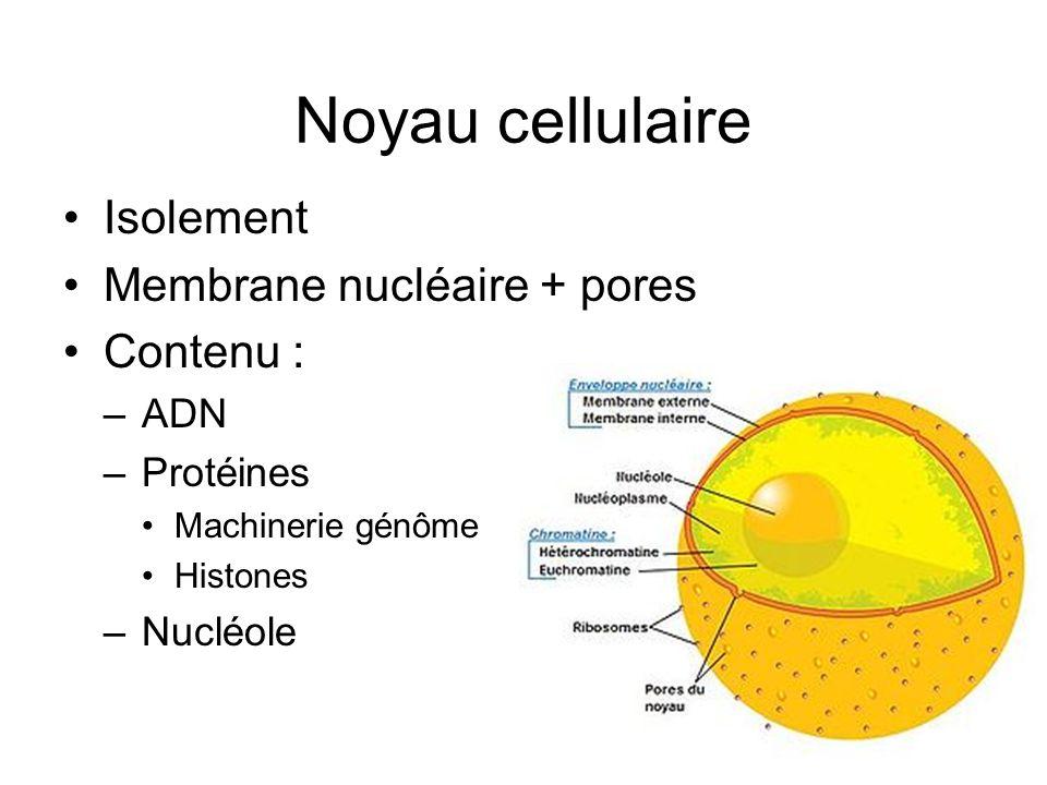 Noyau cellulaire Isolement Membrane nucléaire + pores Contenu : –ADN –Protéines Machinerie génôme Histones –Nucléole