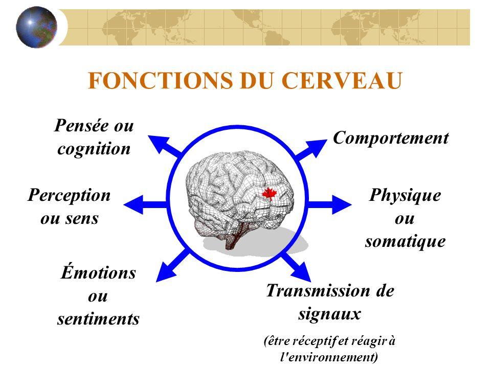 FONCTIONS DU CERVEAU Perception ou sens Émotions ou sentiments Comportement Physique ou somatique Transmission de signaux (être réceptif et réagir à l