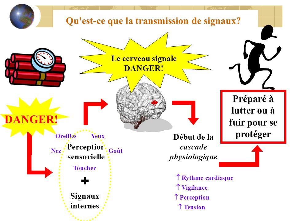 Qu'est-ce que la transmission de signaux? Le cerveau signale DANGER! Début de la cascade physiologique Rythme cardiaque Tension Vigilance Perception P