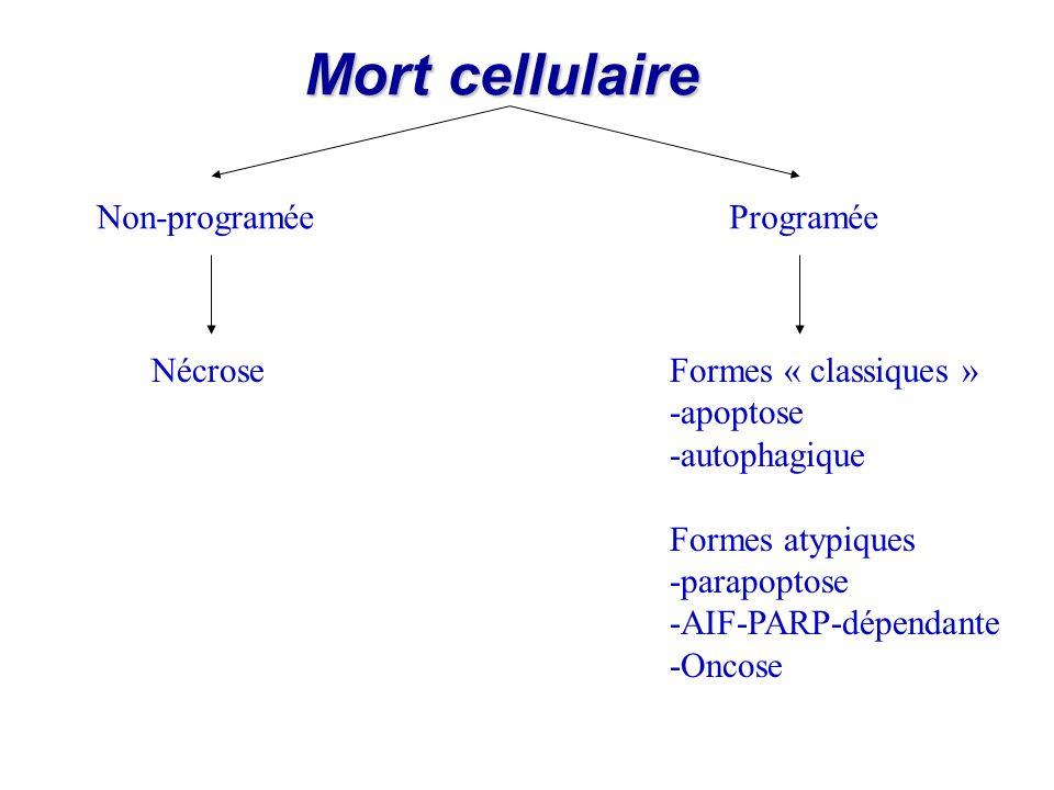 Mort cellulaire Non-programéeProgramée NécroseFormes « classiques » -apoptose -autophagique Formes atypiques -parapoptose -AIF-PARP-dépendante -Oncose