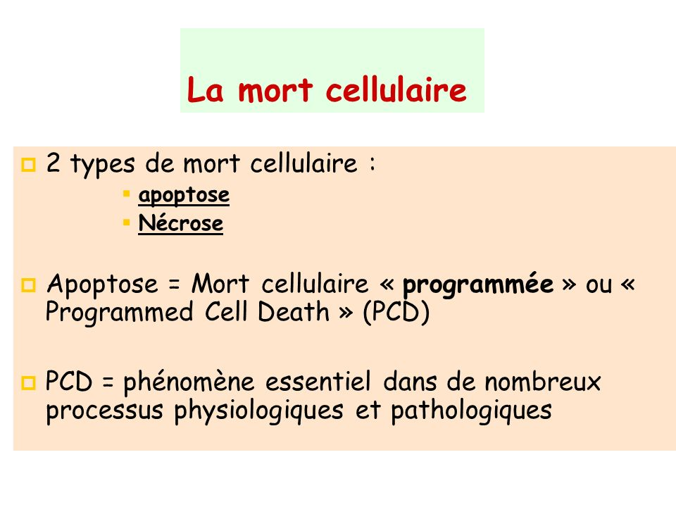 La mort cellulaire 2 types de mort cellulaire : apoptose Nécrose Apoptose = Mort cellulaire « programmée » ou « Programmed Cell Death » (PCD) PCD = ph