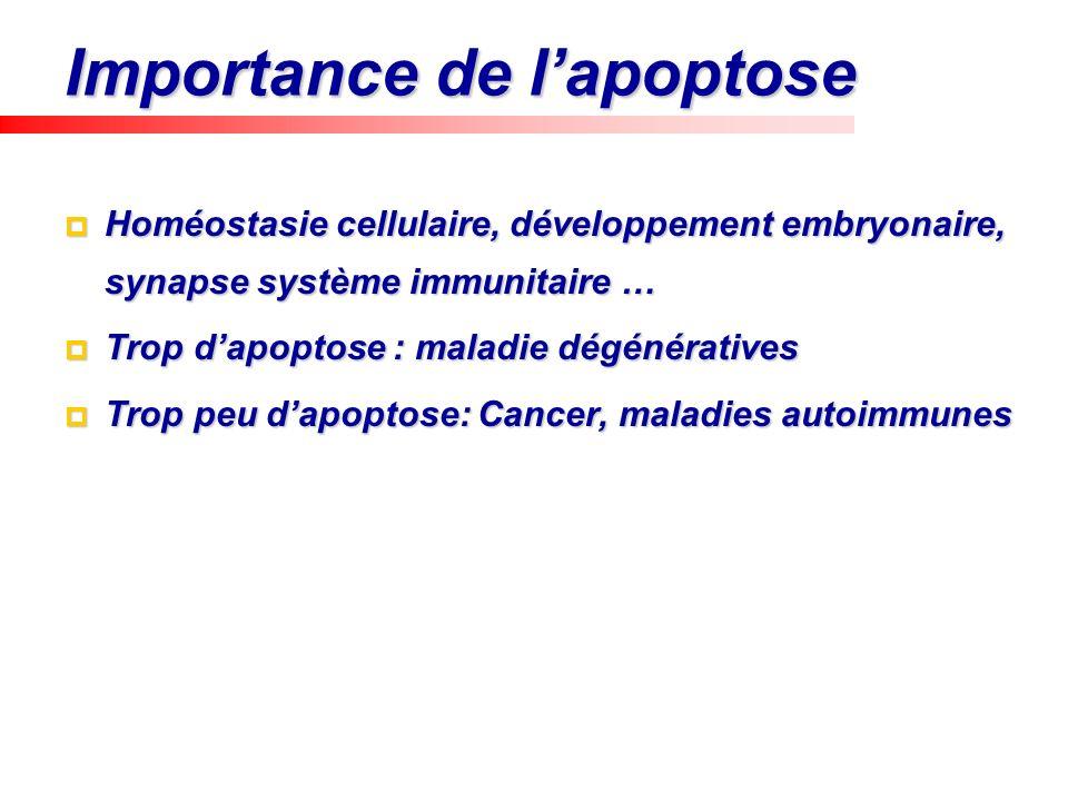 Importance de lapoptose Homéostasie cellulaire, développement embryonaire, synapse système immunitaire … Homéostasie cellulaire, développement embryon