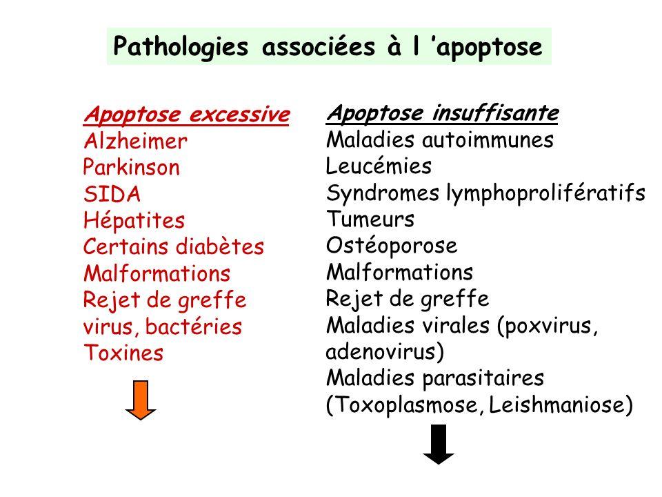 Pathologies associées à l apoptose Apoptose excessive Alzheimer Parkinson SIDA Hépatites Certains diabètes Malformations Rejet de greffe virus, bactér