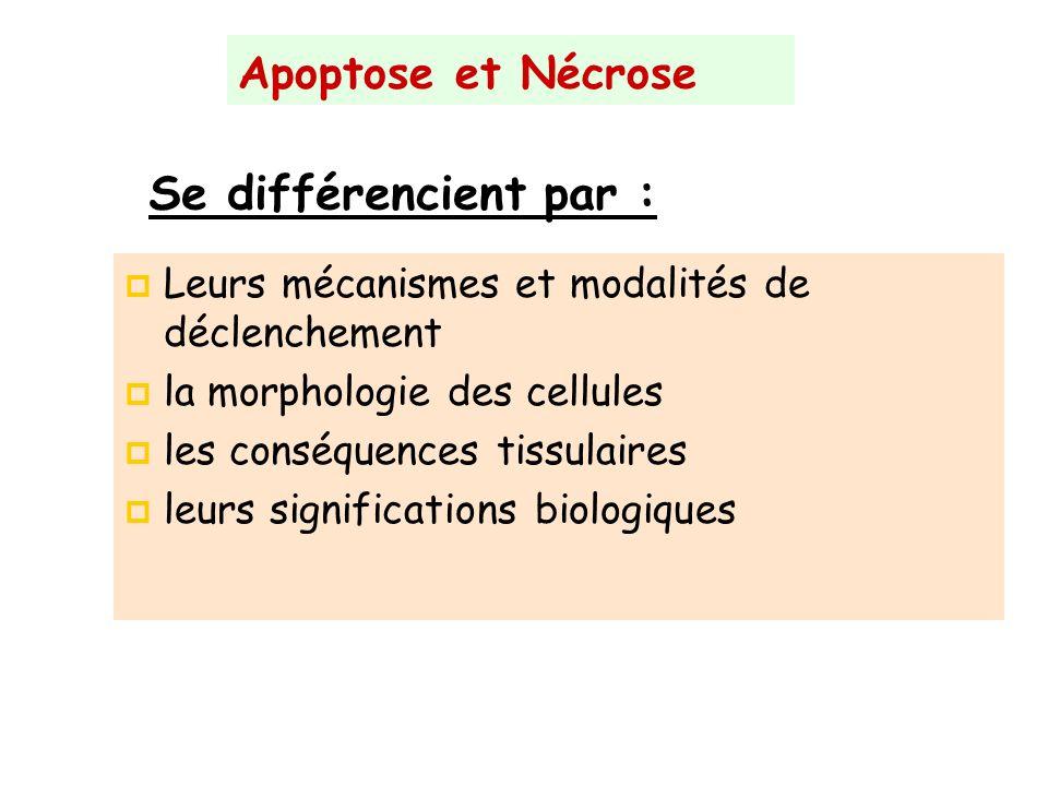 Apoptose et Nécrose Leurs mécanismes et modalités de déclenchement la morphologie des cellules les conséquences tissulaires leurs significations biolo