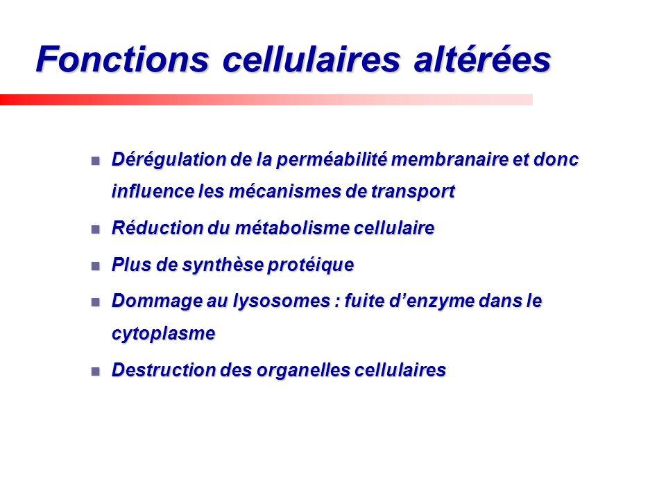 Fonctions cellulaires altérées Dérégulation de la perméabilité membranaire et donc influence les mécanismes de transport Dérégulation de la perméabili