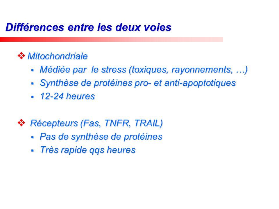 Différences entre les deux voies Mitochondriale Mitochondriale Médiée par le stress (toxiques, rayonnements, …) Médiée par le stress (toxiques, rayonn