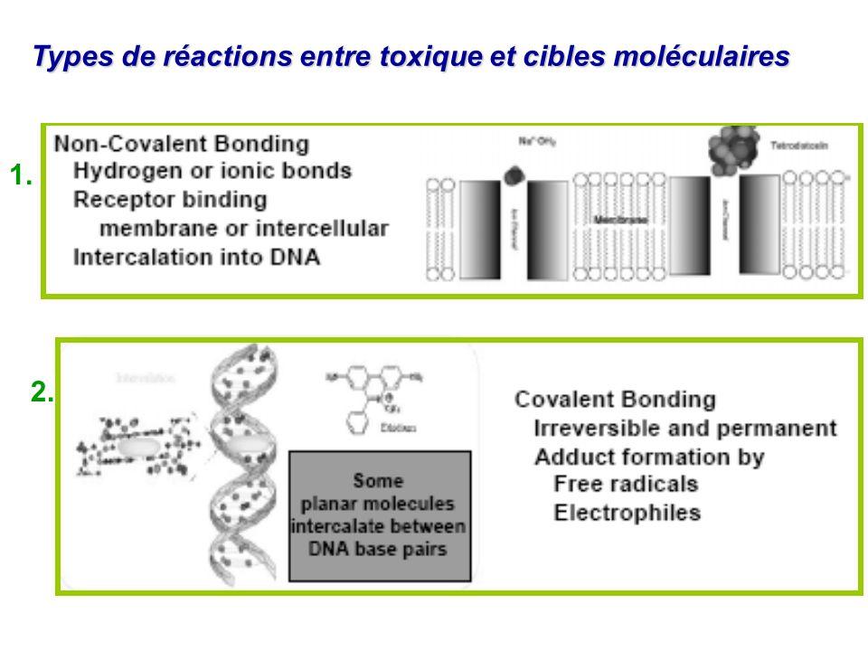 Types de réactions entre toxique et cibles moléculaires 1. 2.
