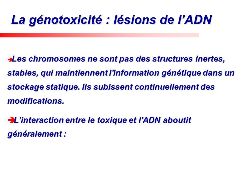 Les chromosomes ne sont pas des structures inertes, stables, qui maintiennent l'information génétique dans un stockage statique. Ils subissent continu
