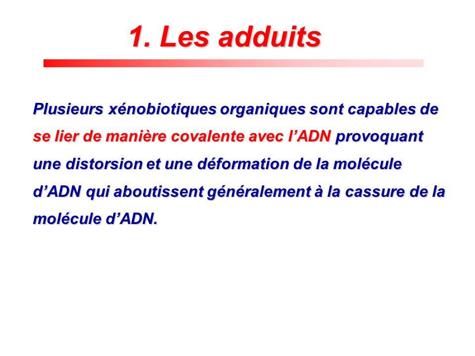 1. Les adduits Plusieurs xénobiotiques organiques sont capables de se lier de manière covalente avec lADN provoquant une distorsion et une déformation