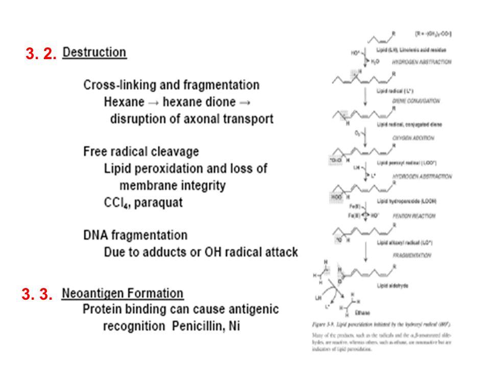Les macrolésions: Les macrolésions: Il sagit de lésions qui touchent la totalité du chromosome.