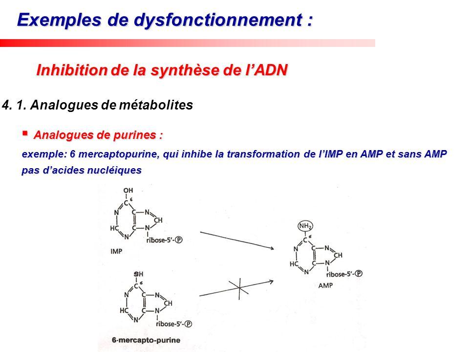 Analogues de pyrimidines Analogues de pyrimidines Exemple: 5-Fluoro uracile, qui inhibe la transformation de lIMP en AMP et sans AMP pas dacides nucléiques Uracile + PRPP UMP dFUMP … UDP dUDP dUMP dTDP ADN
