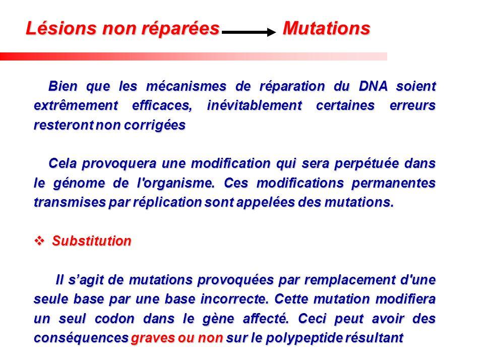 Bien que les mécanismes de réparation du DNA soient extrêmement efficaces, inévitablement certaines erreurs resteront non corrigées Cela provoquera un