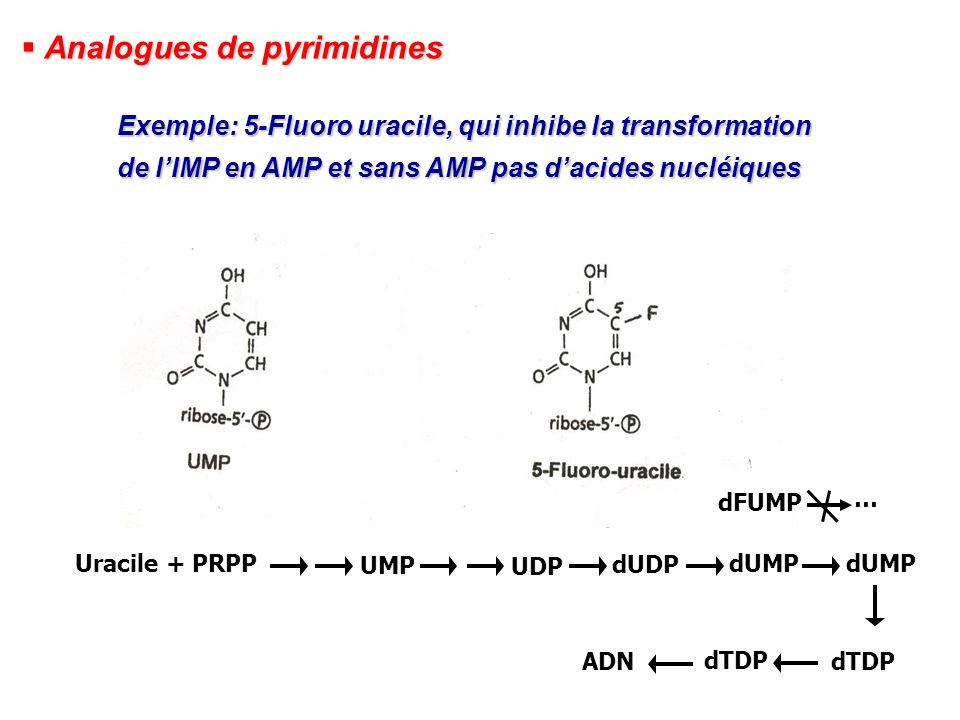 Analogues de pyrimidines Analogues de pyrimidines Exemple: 5-Fluoro uracile, qui inhibe la transformation de lIMP en AMP et sans AMP pas dacides nuclé