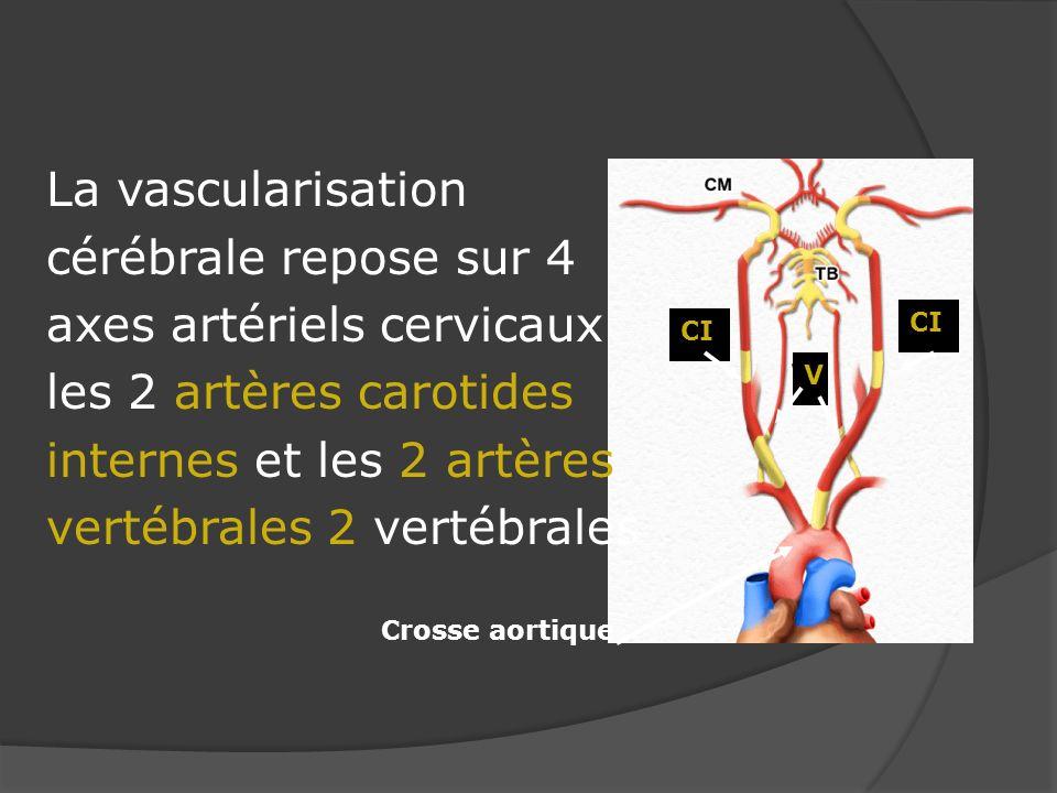 La vascularisation cérébrale repose sur 4 axes artériels cervicaux les 2 artères carotides internes et les 2 artères vertébrales 2 vertébrales V CI Cr