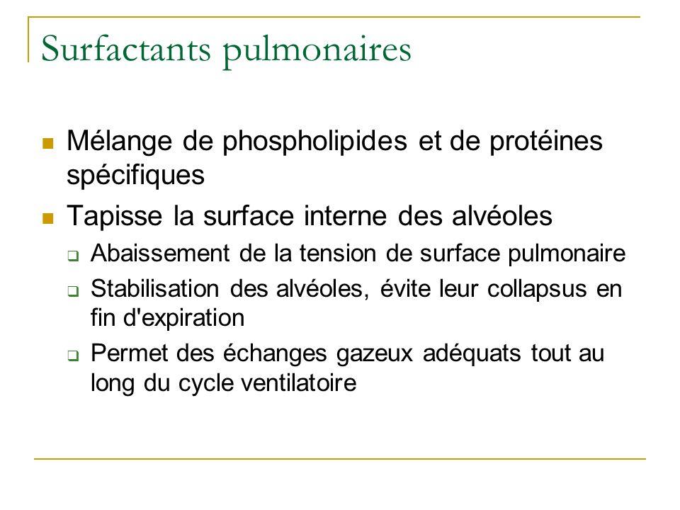 Surfactants pulmonaires Mélange de phospholipides et de protéines spécifiques Tapisse la surface interne des alvéoles Abaissement de la tension de sur