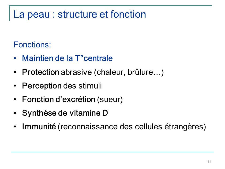 11 La peau : structure et fonction Fonctions: Maintien de la T°centrale Protection abrasive (chaleur, brûlure…) Perception des stimuli Fonction dexcré