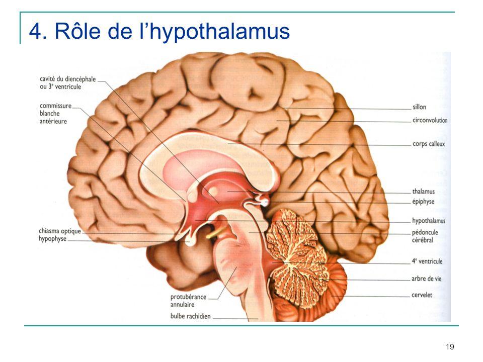 19 4. Rôle de lhypothalamus