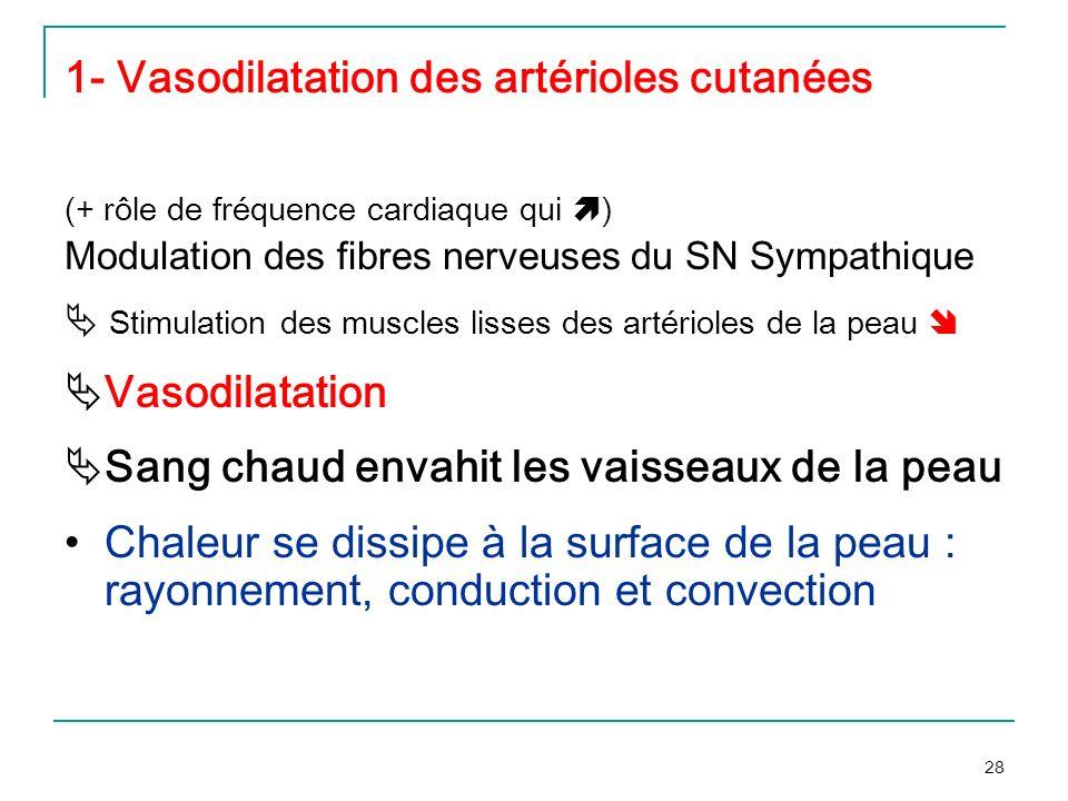 28 1- Vasodilatation des artérioles cutanées (+ rôle de fréquence cardiaque qui ) Modulation des fibres nerveuses du SN Sympathique Stimulation des mu