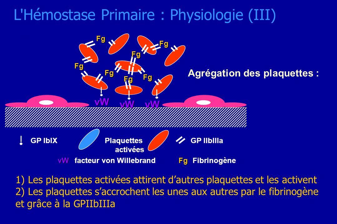 Agrégation des plaquettes : vW vWvW Fg Fg Fg Fg Fg Fg Fg vWfacteur von Willebrand GP IIbIIIaGP IbIX FgFibrinogène Plaquettes activées 1) Les plaquette