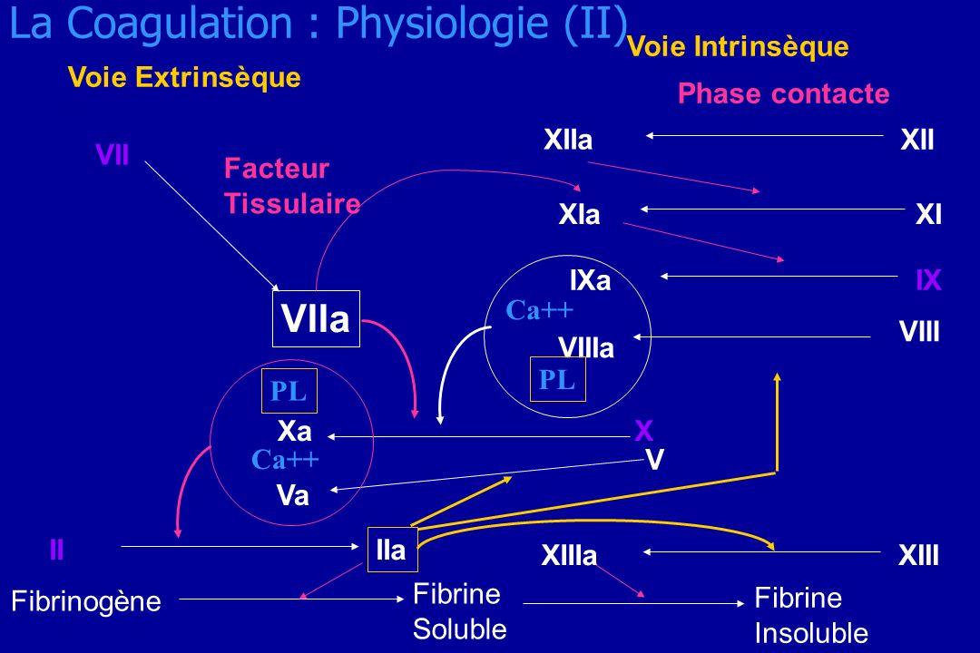 La Coagulation : Physiologie (II) Voie Extrinsèque Voie Intrinsèque Phase contacte XII XIIa XIXIa IXIXa V Va XXa VIIa VII Facteur Tissulaire Fibrine S