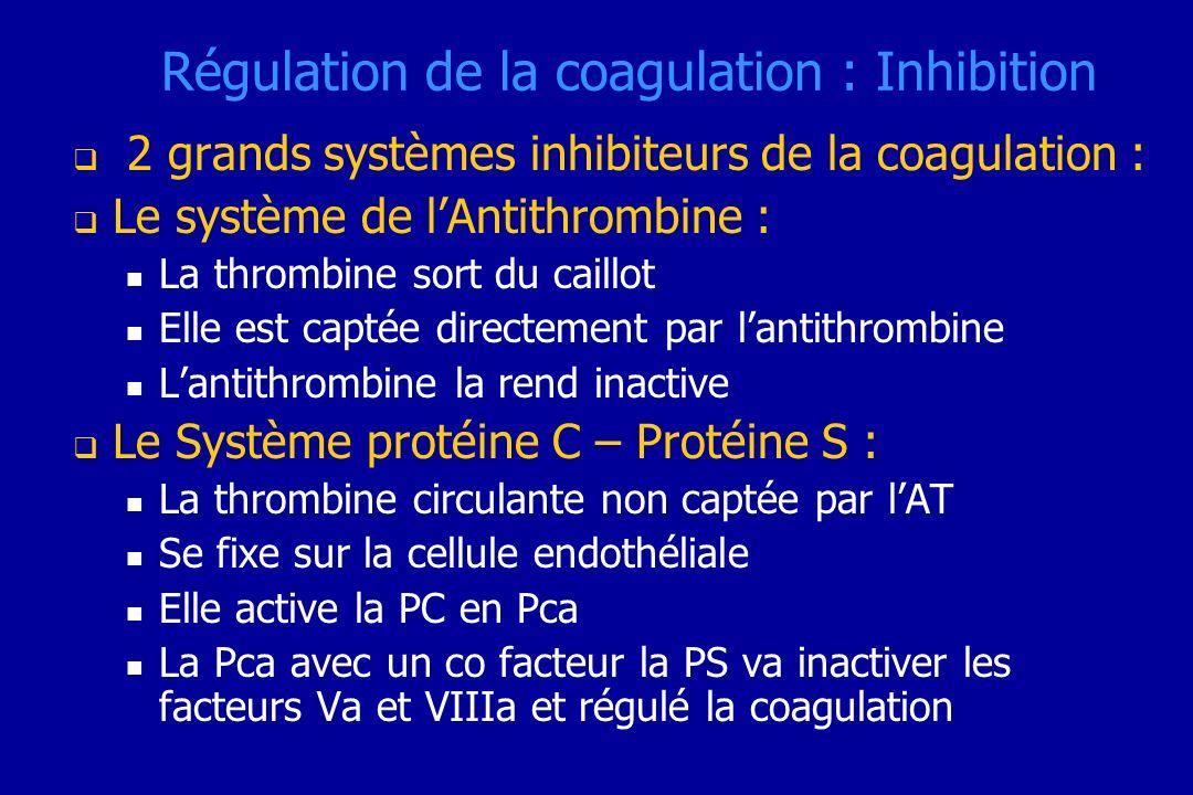 Régulation de la coagulation : Inhibition 2 grands systèmes inhibiteurs de la coagulation : Le système de lAntithrombine : La thrombine sort du caillo
