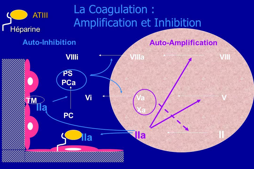 La Coagulation : Amplification et Inhibition Auto-Amplification Auto-Inhibition VIIIaVIIIVIIIi PS PCa IIa Va V II Xa Vi IIa HéparineATIII TM IIa PC