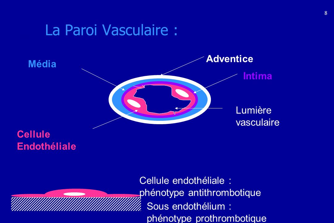 La Fibrinolyse : Exploration Test semi-global : Temps de lyse des Euglobulines ou Von Kaulla Dosages des différents agents de la fibrinolyse : Plasminogène PAI Dosages des produits de la fibrinolyse : PDF D-Dimères : forte valeur prédictive négative pour la thrombose