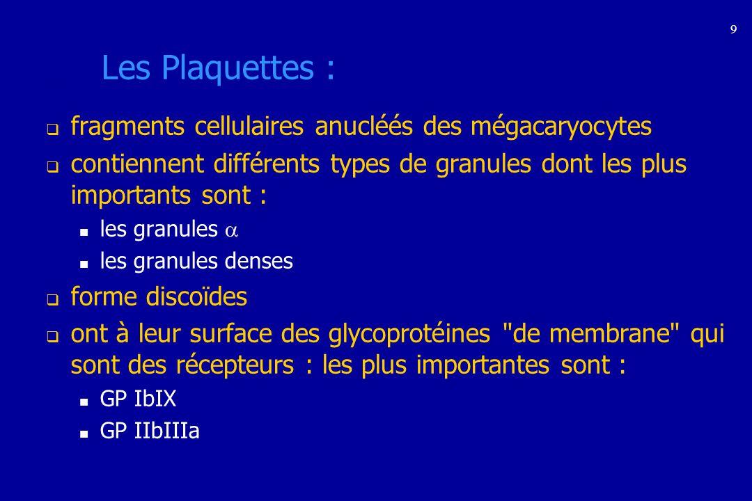 Morphologie des plaquettes Coloration classique MMG : GR = 7 µ - Plaquettes = 1 à 3 µ Microscopie électronique