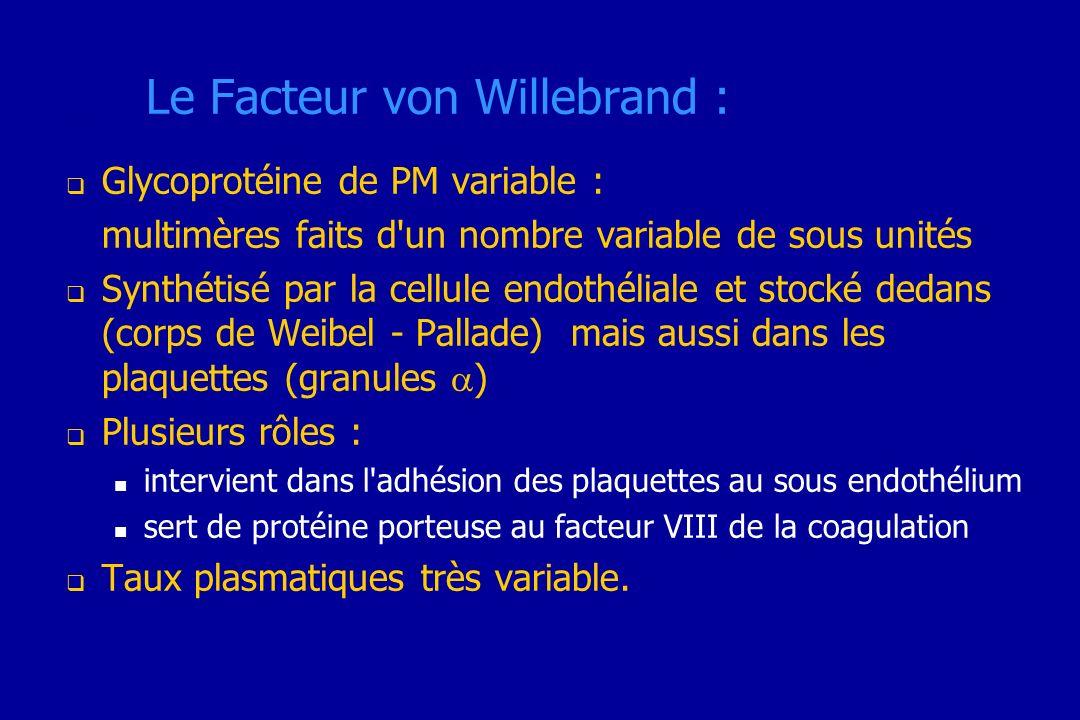 Le Facteur von Willebrand : Glycoprotéine de PM variable : multimères faits d'un nombre variable de sous unités Synthétisé par la cellule endothéliale