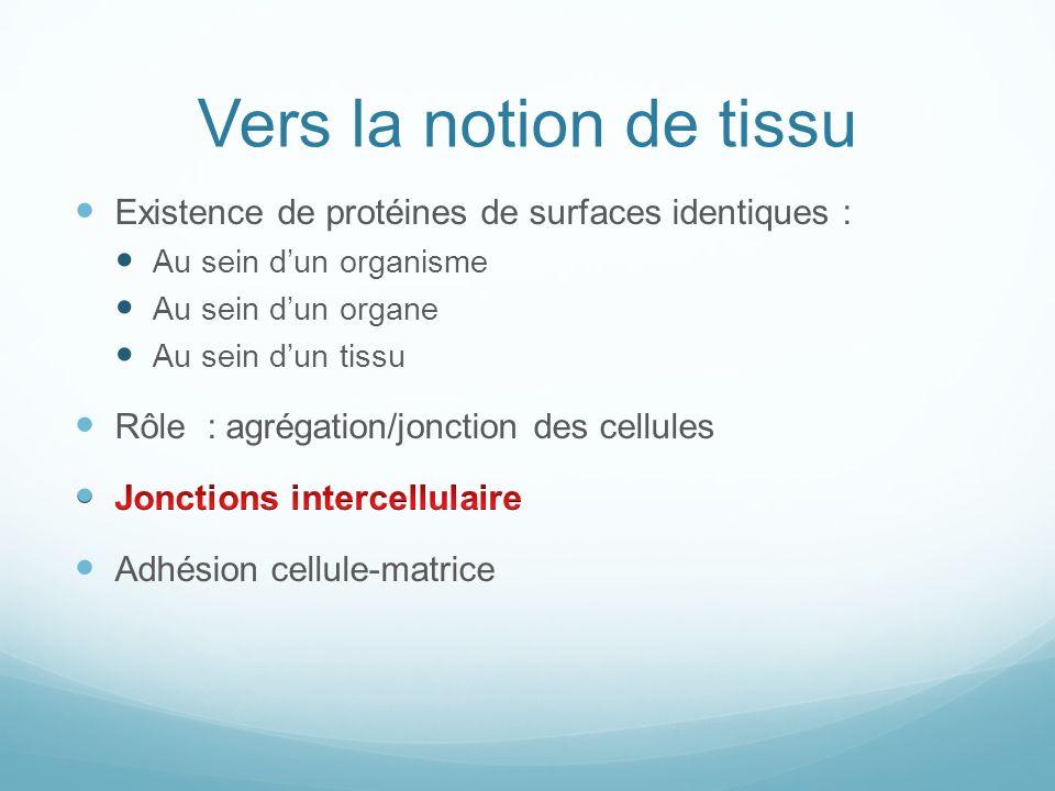 Protéines dadhésion N-CAM : neuronal cell adhesion molecule Cadhérines Ex : E-cadhérines (épithéliums) Intégrines Adhésion lame basale et protéines de la MEC Sélectines Ex : diapédèse