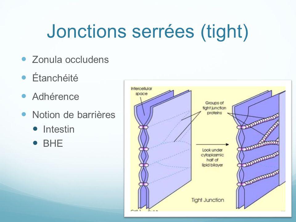 Jonction serrées : structure