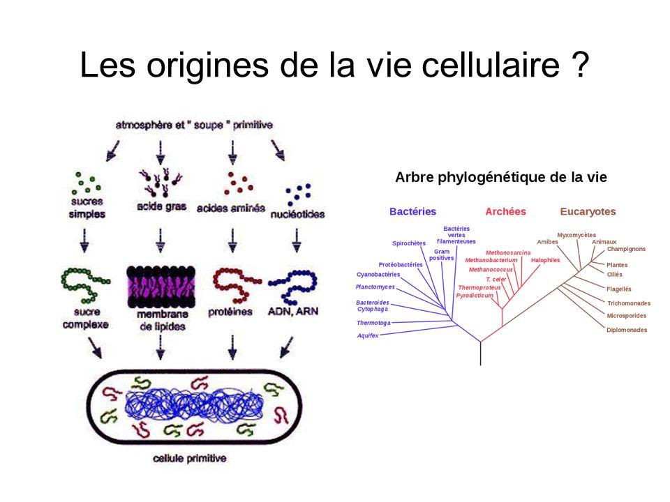 Les origines de la vie cellulaire ?