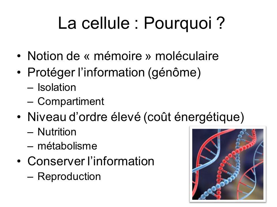 La cellule : Pourquoi ? Notion de « mémoire » moléculaire Protéger linformation (génôme) –Isolation –Compartiment Niveau dordre élevé (coût énergétiqu