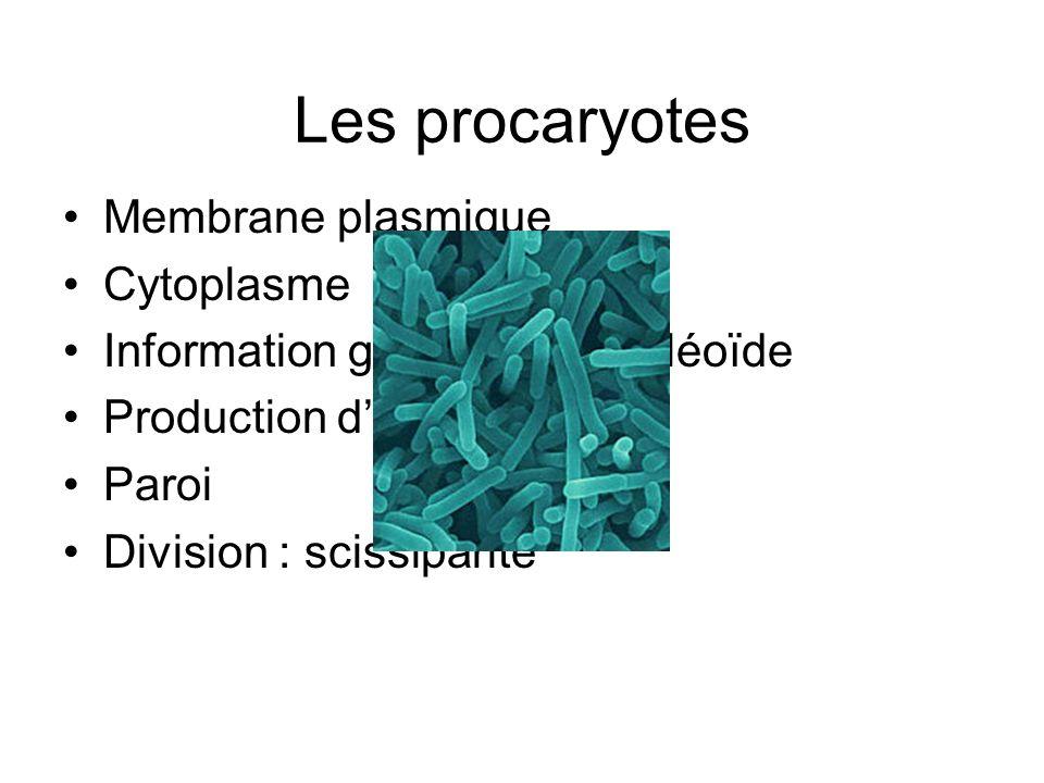 Les procaryotes Membrane plasmique Cytoplasme Information génétique : nucléoïde Production dénergie Paroi Division : scissiparité