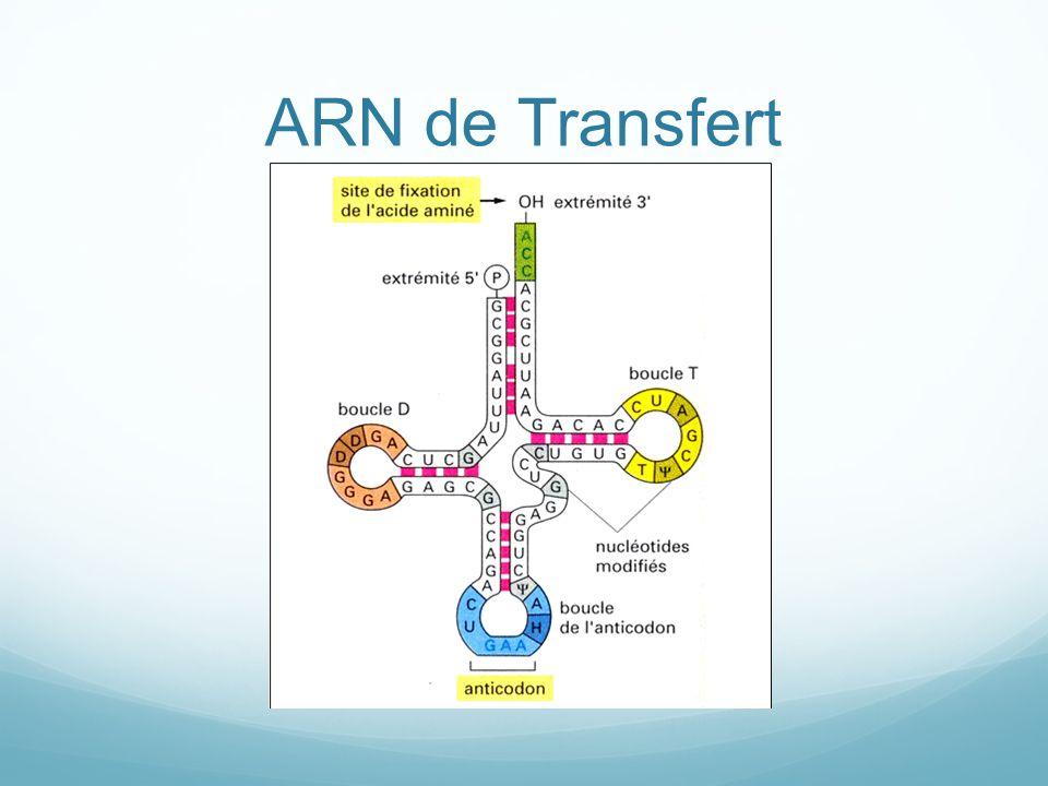 ARN de Transfert