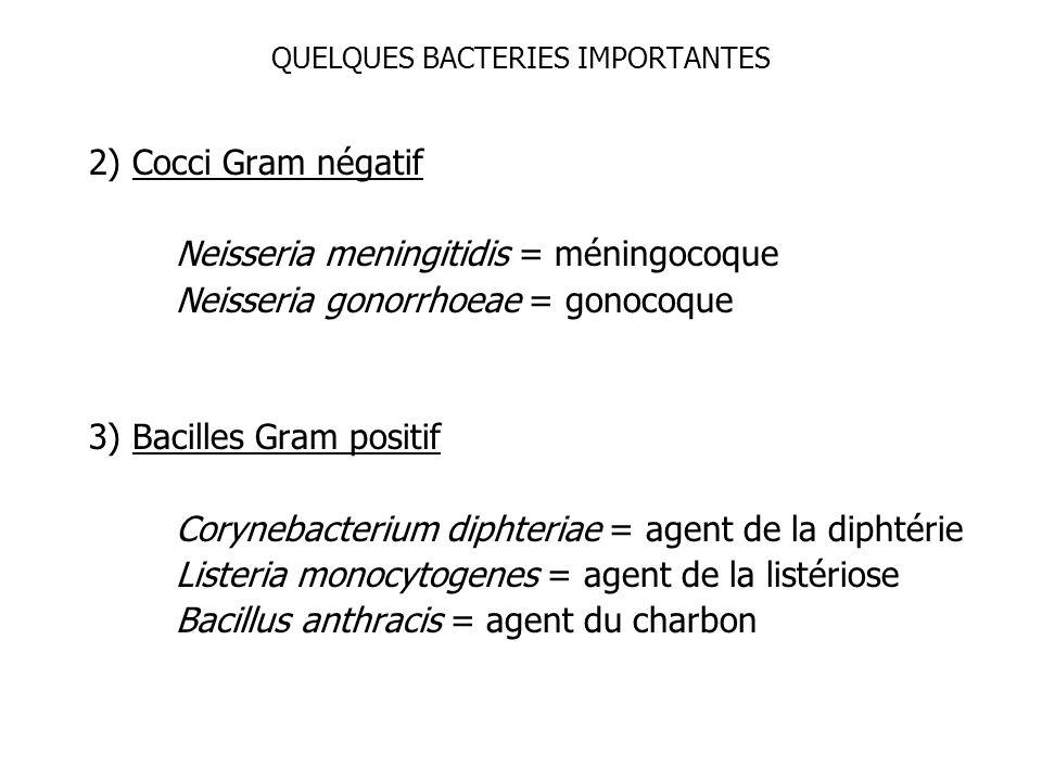 QUELQUES BACTERIES IMPORTANTES 2) Cocci Gram négatif Neisseria meningitidis = méningocoque Neisseria gonorrhoeae = gonocoque 3) Bacilles Gram positif