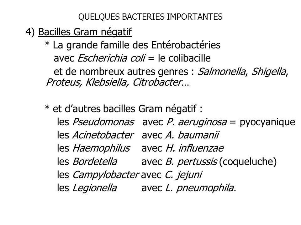 QUELQUES BACTERIES IMPORTANTES 4) Bacilles Gram négatif * La grande famille des Entérobactéries avec Escherichia coli = le colibacille et de nombreux