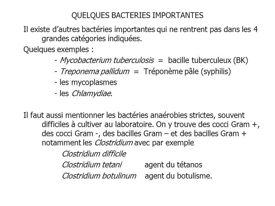 QUELQUES BACTERIES IMPORTANTES Il existe dautres bactéries importantes qui ne rentrent pas dans les 4 grandes catégories indiquées. Quelques exemples