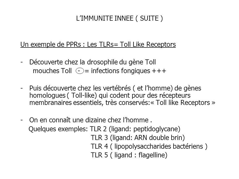 LIMMUNITE INNEE ( SUITE ) Un exemple de PPRs : Les TLRs= Toll Like Receptors -Découverte chez la drosophile du gène Toll mouches Toll - = infections f