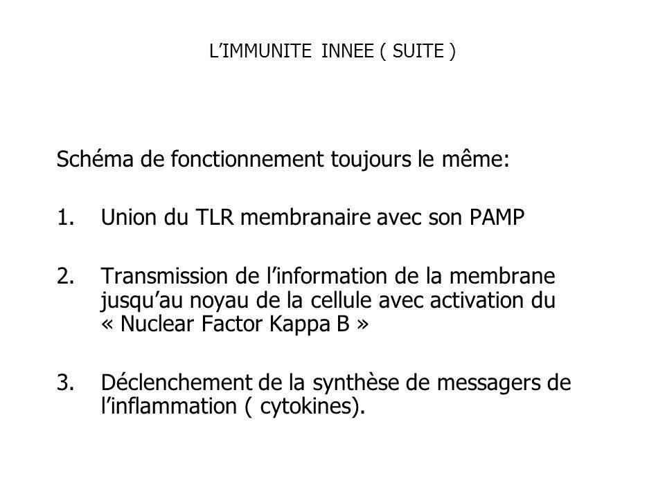 LIMMUNITE INNEE ( SUITE ) Schéma de fonctionnement toujours le même: 1.Union du TLR membranaire avec son PAMP 2.Transmission de linformation de la mem