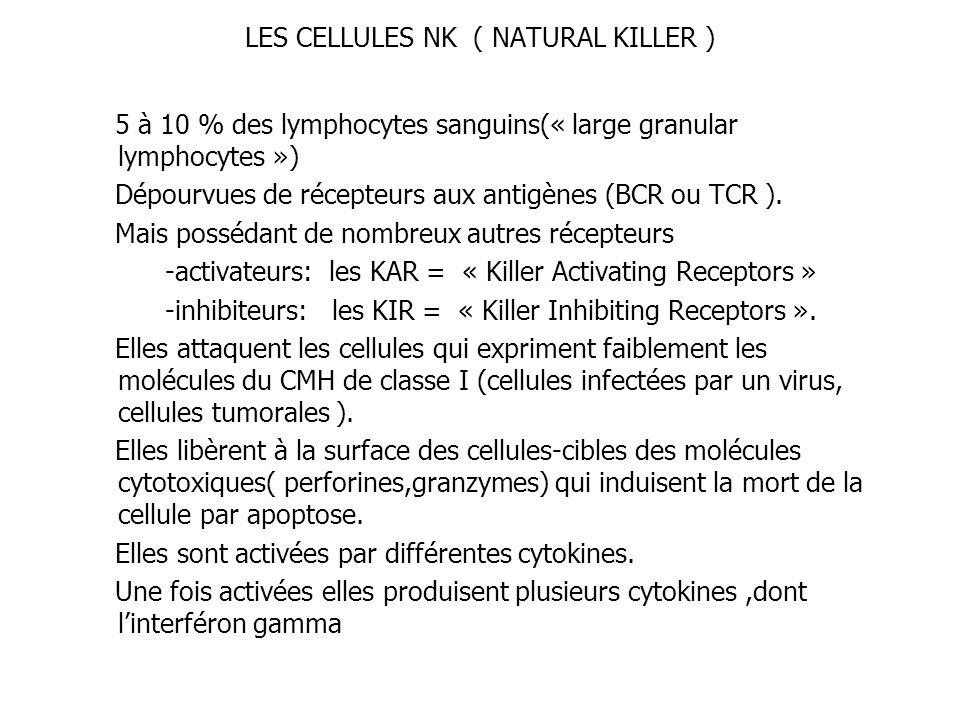 LES CELLULES NK ( NATURAL KILLER ) 5 à 10 % des lymphocytes sanguins(« large granular lymphocytes ») Dépourvues de récepteurs aux antigènes (BCR ou TC